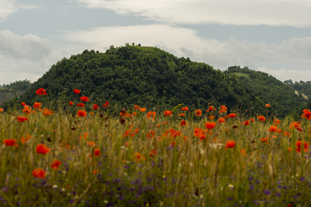 Parco regionale dell'Abbazia di Monteveglio