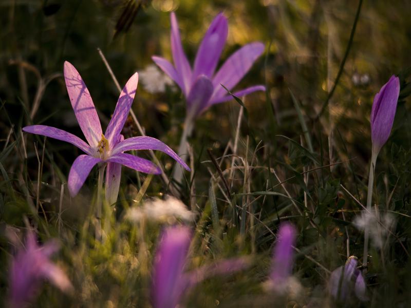 Flora e vegetazione
