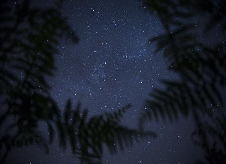 Natura nella notte