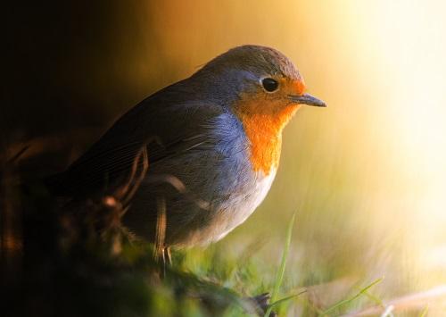 Mangiatoie e canti di uccellini
